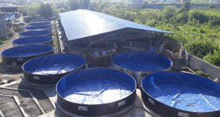 تولید ماهی خاویاری